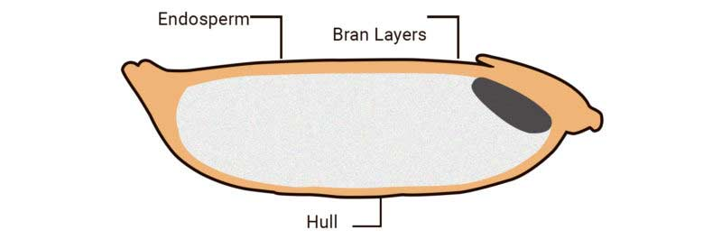 structure of grain