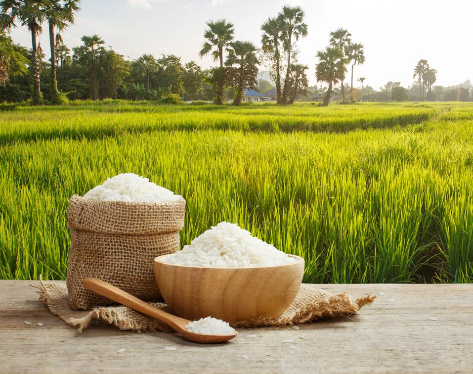 Farm Rice